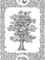 oak-copy.jpg