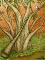 eucalyptusMeraylah.jpg
